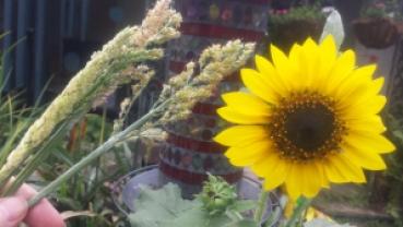 wild seed sprays and sunflowers